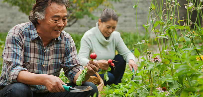 Senior couple gardening radishes